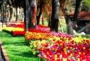 ФЕСТИВАЛ НА ЛАЛЕТО В ИСТАНБУЛ 2020 с нощен преход - 2BB (от София и Пловдив)